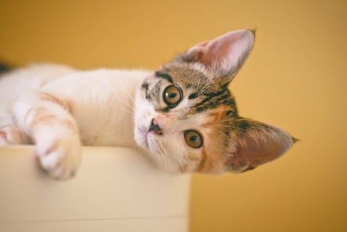 Immagine gratuita di gatto