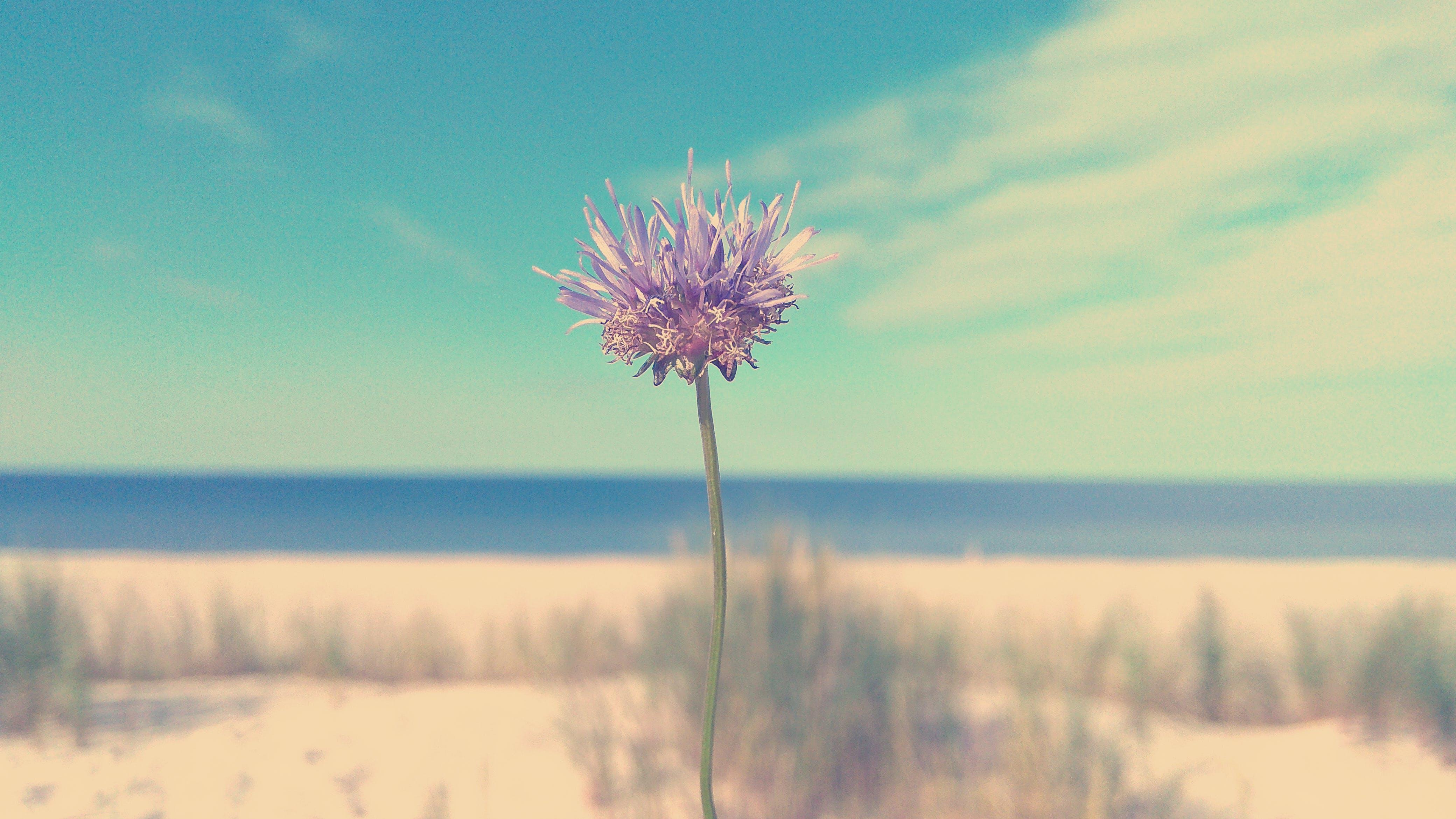 Бесплатное стоковое фото с лето, небо, пляж, цветок