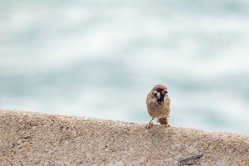 hayvan, küçük, tünemiş içeren Ücretsiz stok fotoğraf