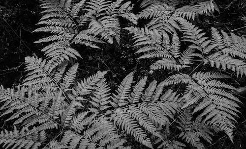 คลังภาพถ่ายฟรี ของ ต้นไม้, สวน, เขียวชอุ่ม, เฟิร์น