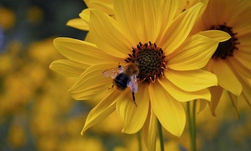 Бесплатное стоковое фото с красивые цветы, красивый, красочный, макросъемка