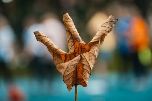 Gratis arkivbilde med makro, nærbilde, tørt blad