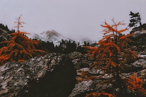 Foto d'estoc gratuïta de amb boira, arbres, boira, constipat