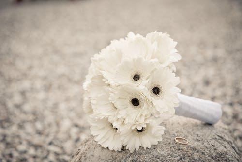 Gratis lagerfoto af blomster, buket, flora, ring