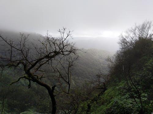 森林の無料の写真素材