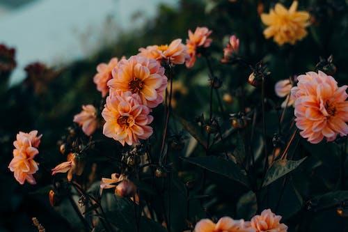꽃, 꽃잎, 식물, 식물군의 무료 스톡 사진