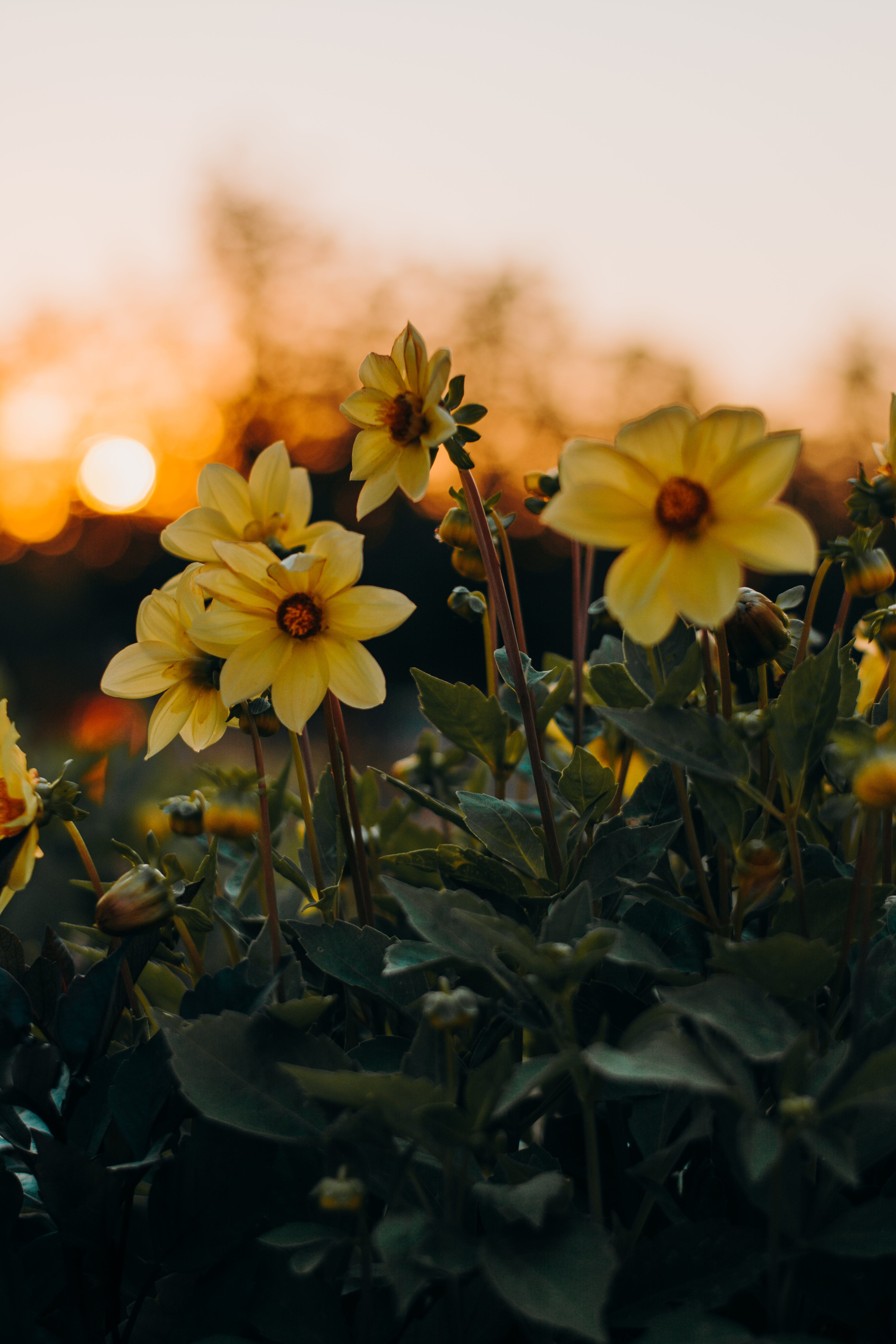 Photo of Yellow Flowers With Green Leaves