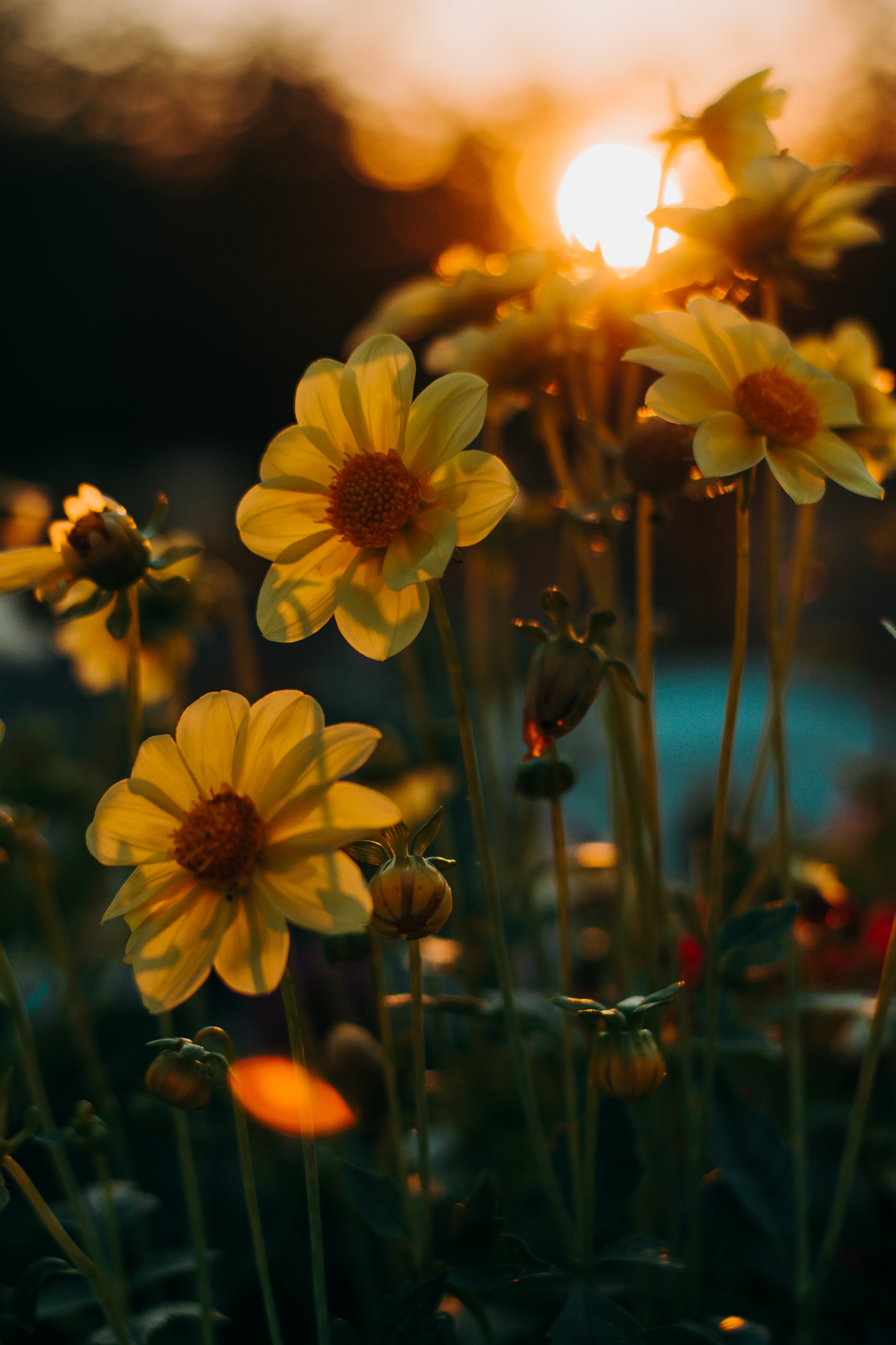 Selective Focus Of Yellow Flowers