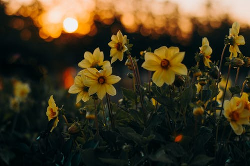 喇叭水仙, 廠, 植物群, 綻放 的 免費圖庫相片