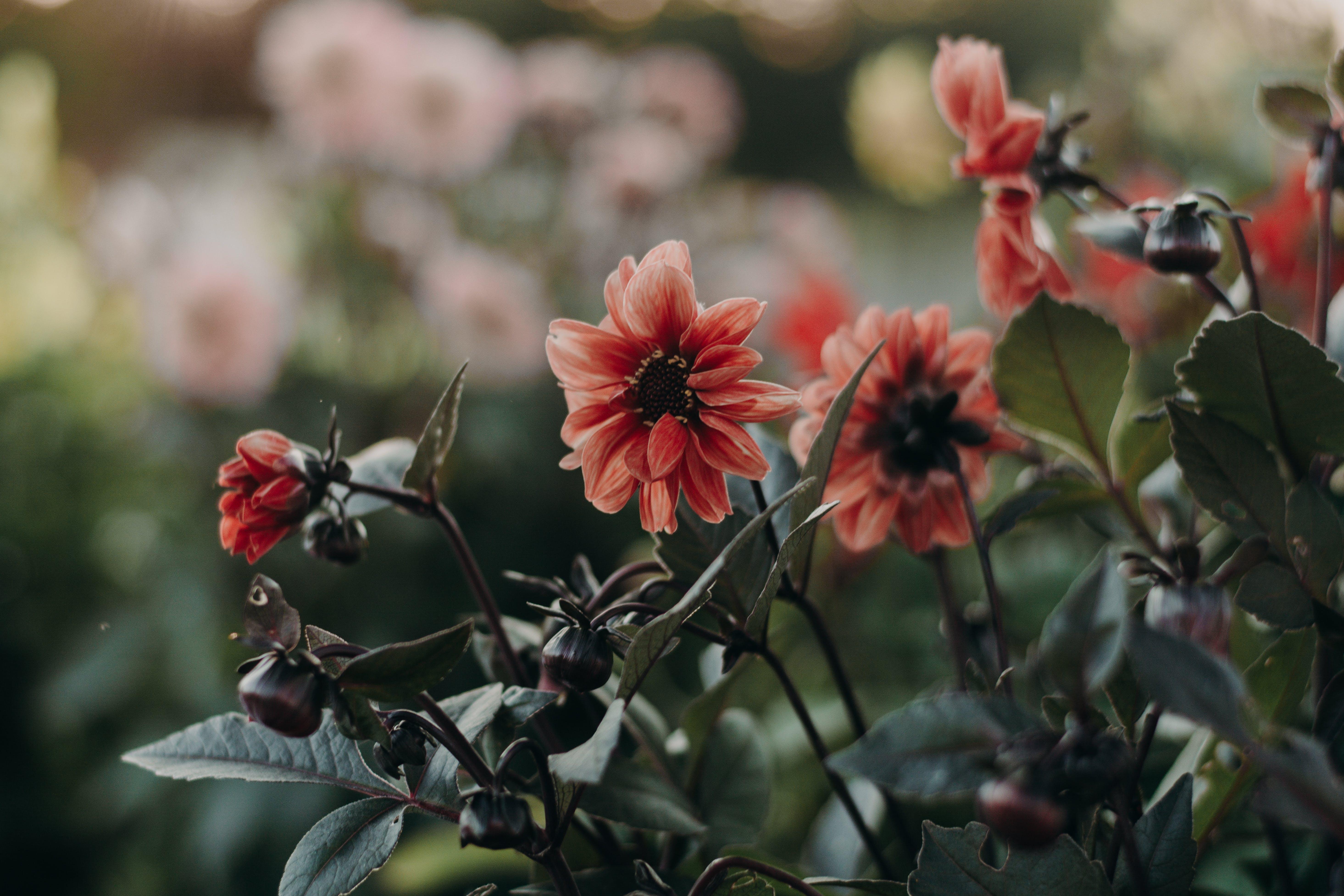 Gratis lagerfoto af bane, blomster, blomstrende, busk