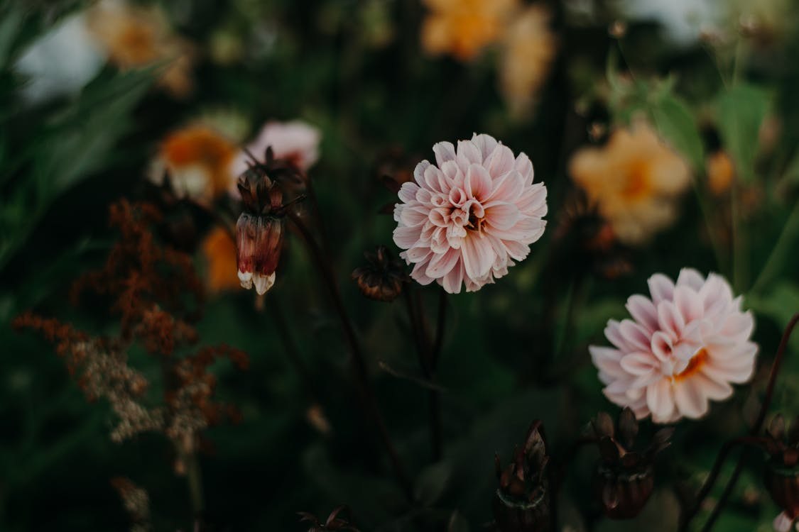 Bahçe, bitki örtüsü, bitkibilim