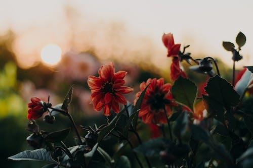 オレンジの花, パーク, フラワーズ, フローラの無料の写真素材
