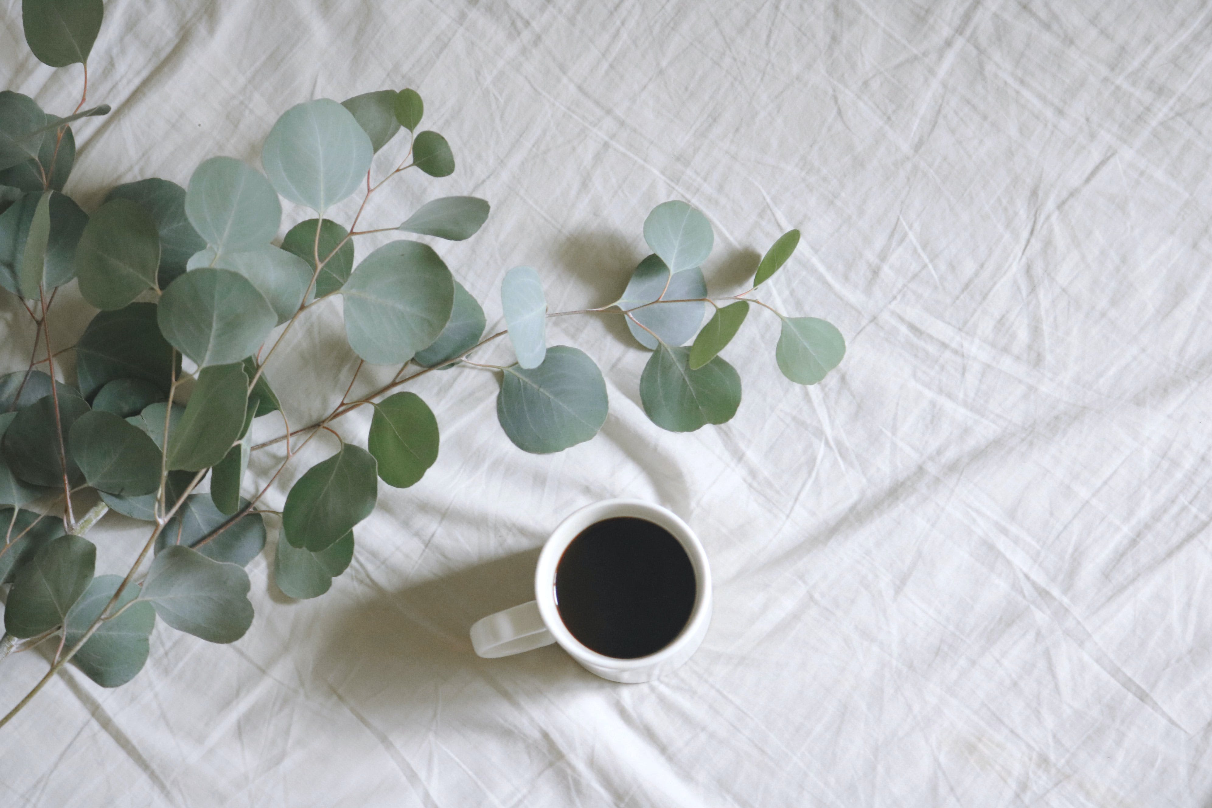 Flat Lay Photography of White Mug Beside Green Leafed Plants