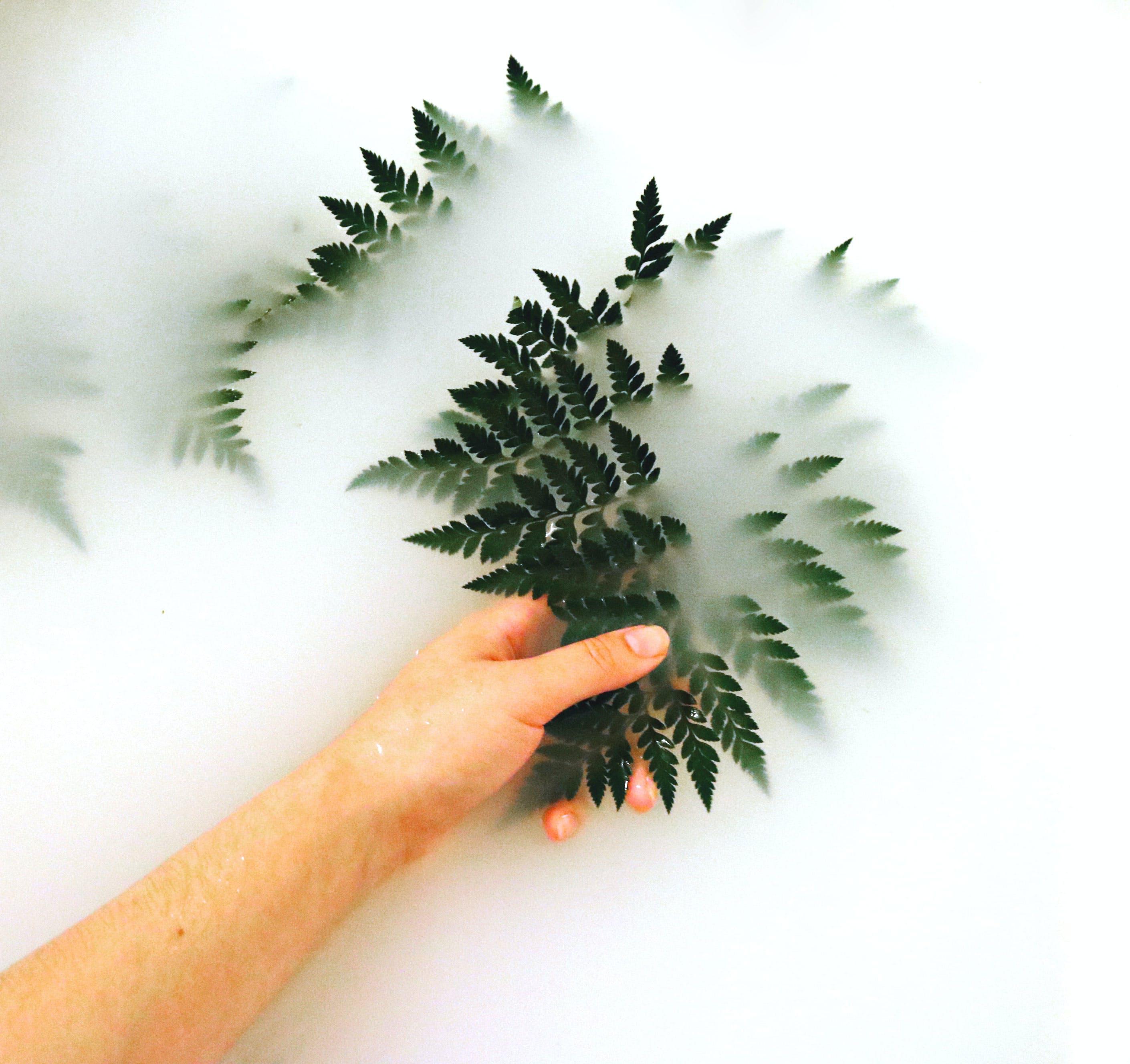 Gratis stockfoto met afzonderlijk, bloemen, de hand van de vrouw, donkergroen