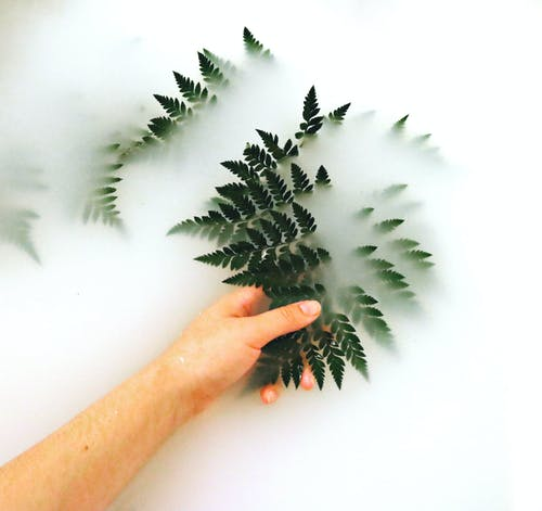 Základová fotografie zdarma na téma čištění, dřevo, flóra, jasný