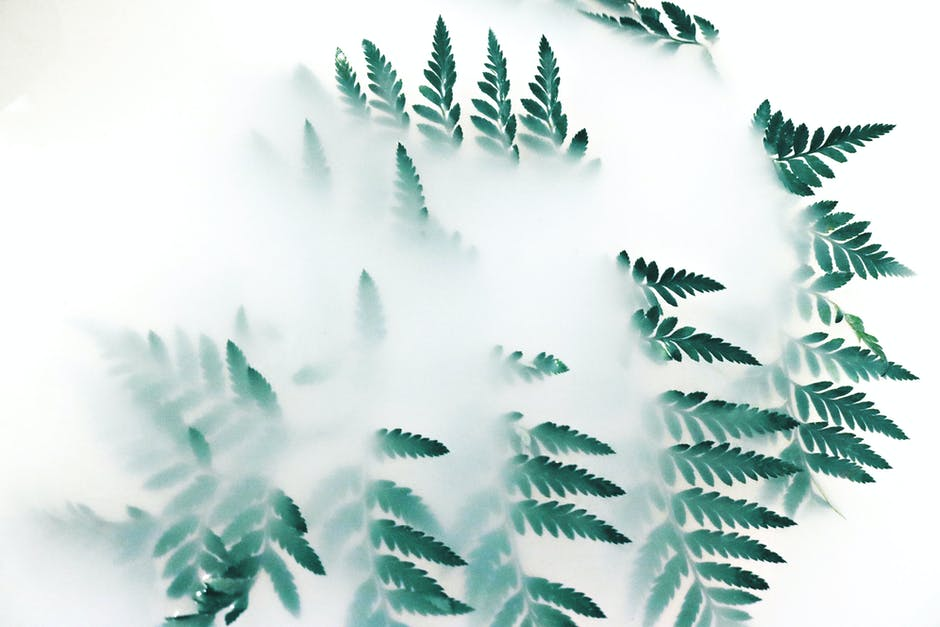 Green leaf plant covered with white smoke