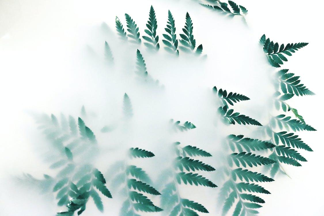 การเจริญเติบโต, ขาว, ต้นไม้