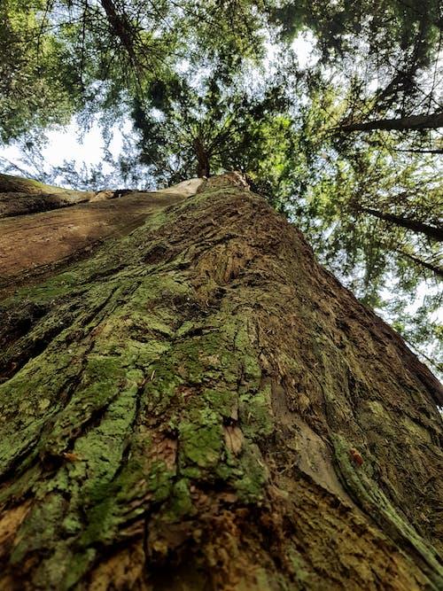 Imagine de stoc gratuită din arbore, atmosferă de vară, atrăgător, bc