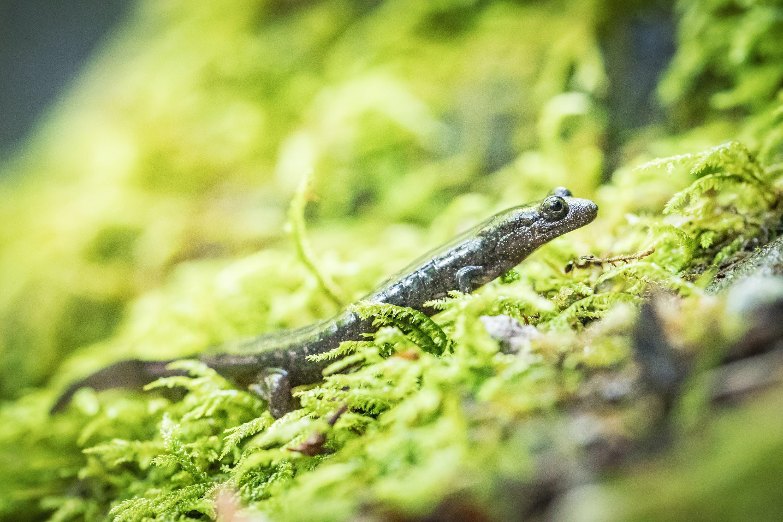 Closeup Photography of Brown Lizard on Green Grass