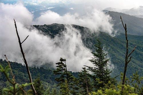 คลังภาพถ่ายฟรี ของ smokies, ต้นไม้, ทิวทัศน์, ธรรมชาติ