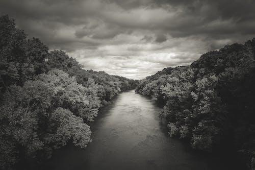 Gratis lagerfoto af falmede, sort og hvid, storm, træer