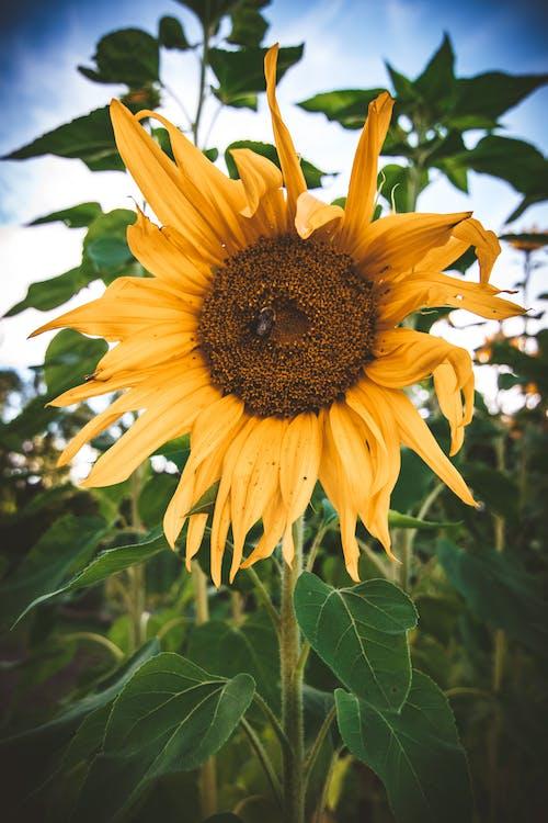 Gratis arkivbilde med blomst, blomsterblad, blomstre, botanisk
