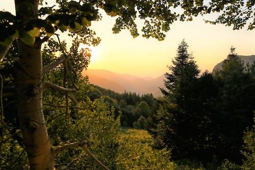 增長, 天性, 山, 日光 的 免費圖庫相片