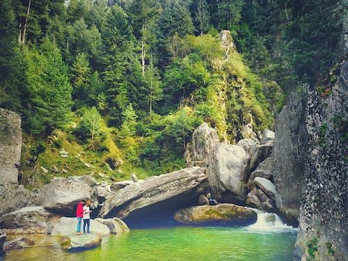 Photos gratuites de arbres, cailloux, cascades, eau