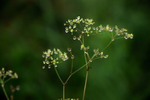 Gratis stockfoto met detailopname. close-up, groen, mist, natuur