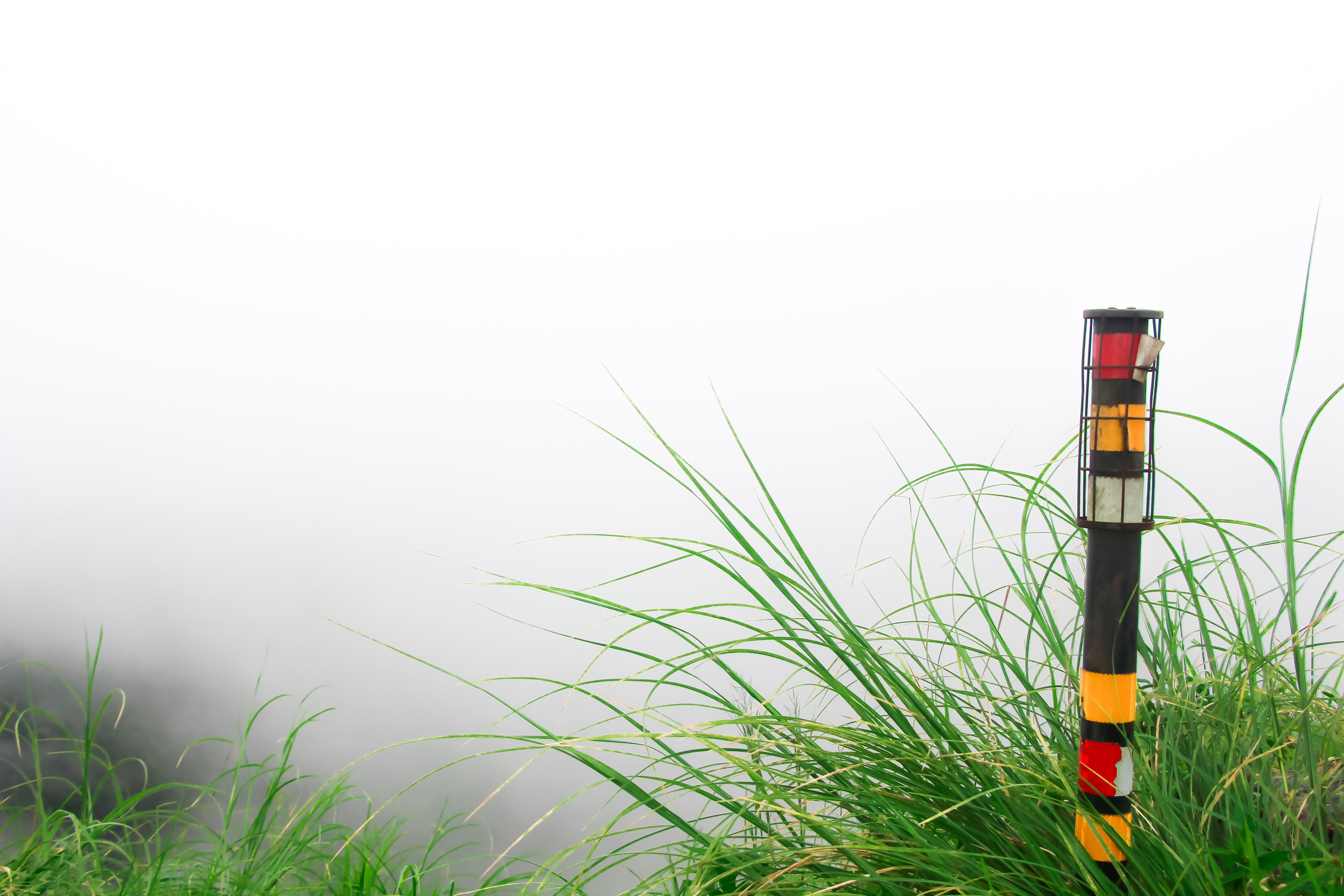 Free stock photo of closeup, foggy, nature