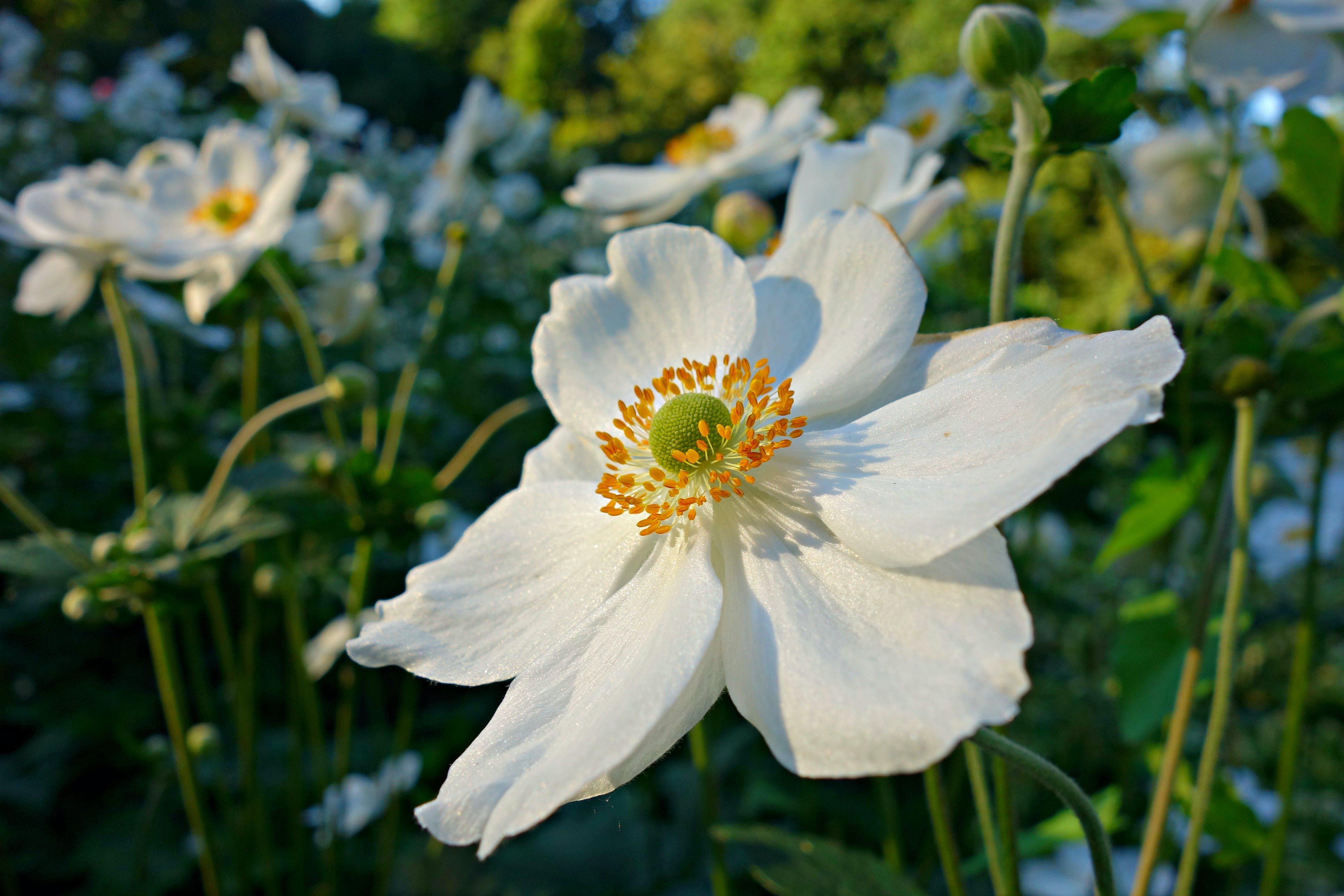 of flower, garden, petal, pollen