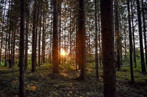 Green Leafed Trees Taken at Sunset