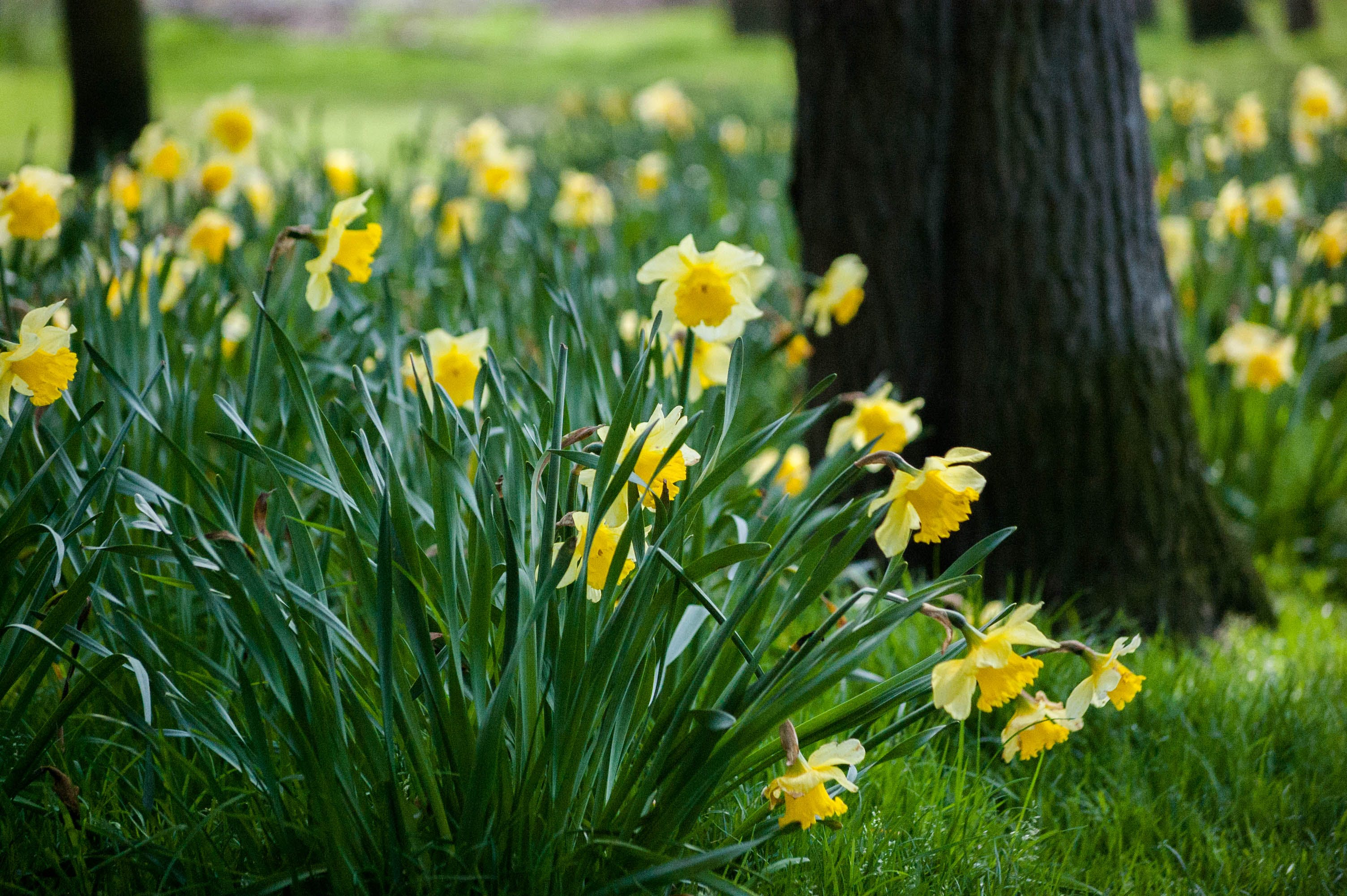 Yellow Petaled Flowers on Grass Beside Trees