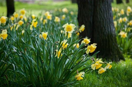 Kostnadsfri bild av blommor, blomning, dagtid, fält