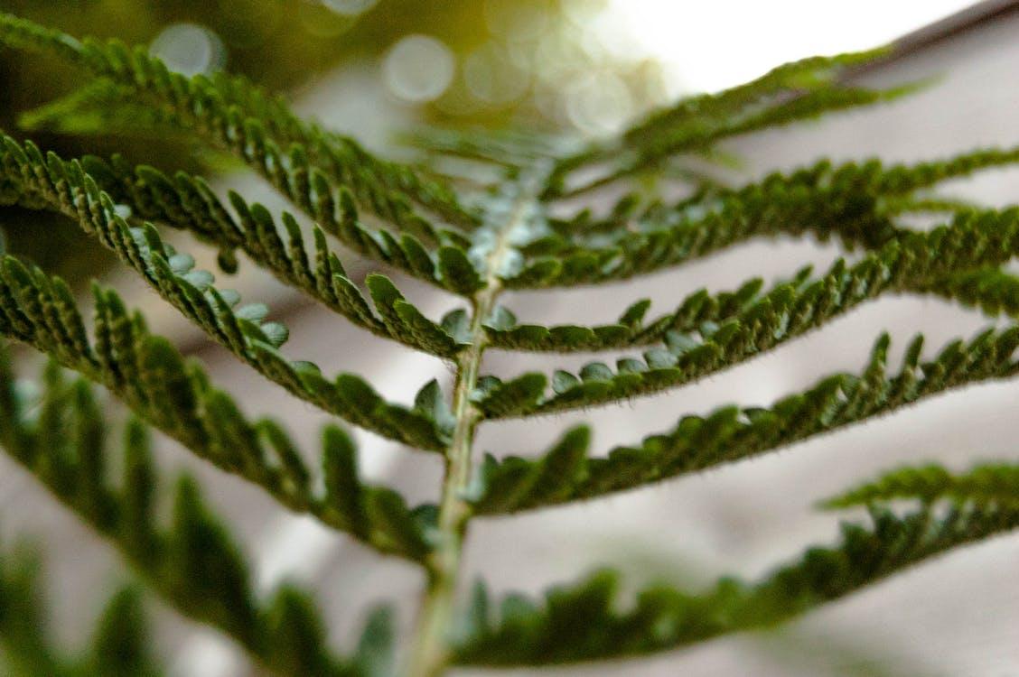 botanický, detailný záber, farby