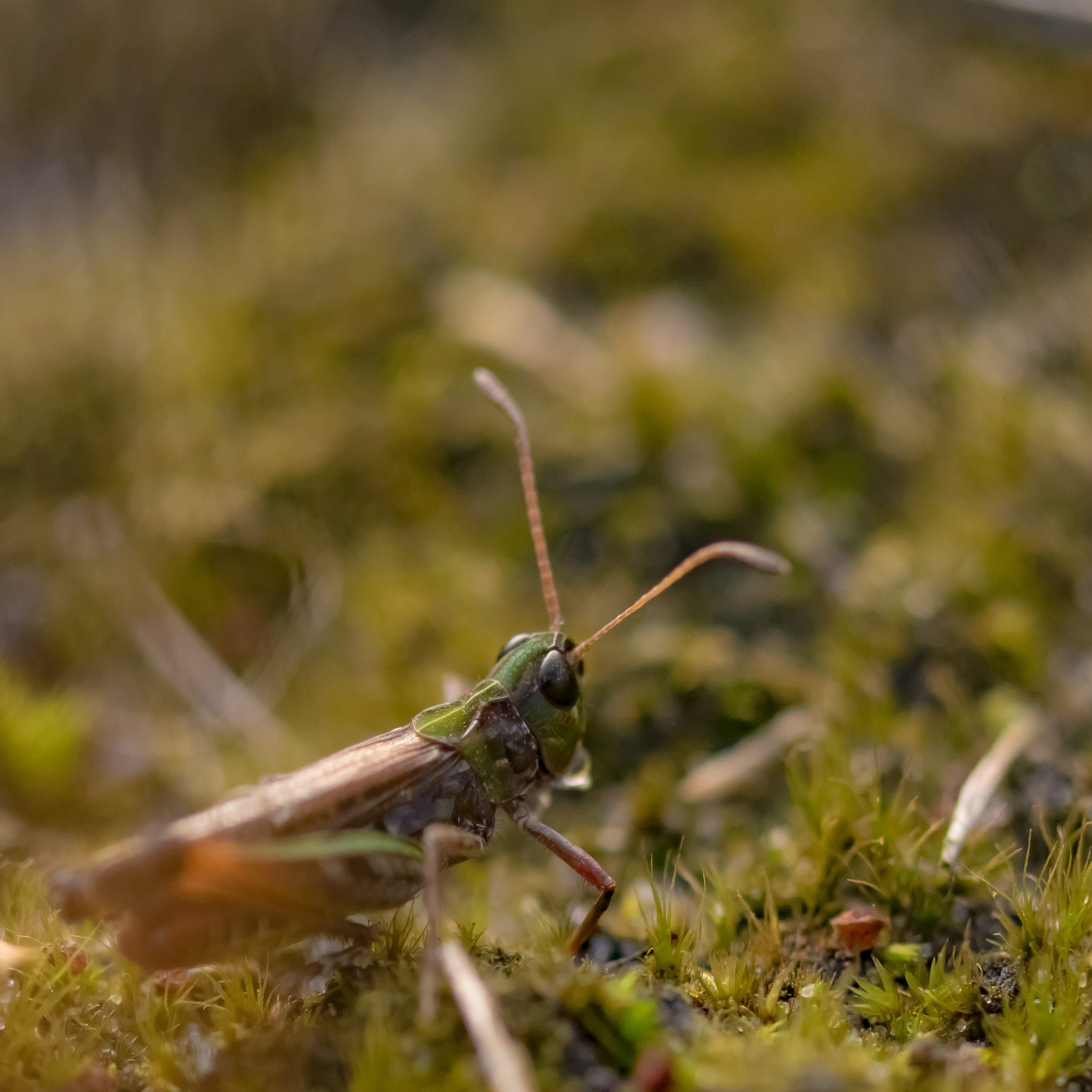 Selective Focus Photo of Grasshopper