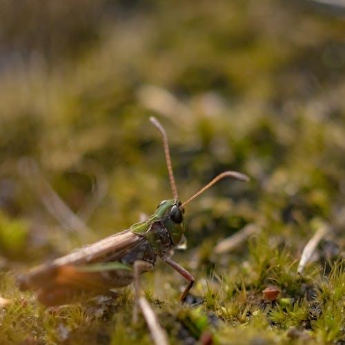 Selective Focus Photo of Grasshopper