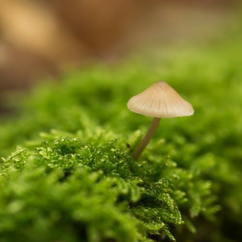 ミケーナ, 森のキノコ, 緑, 蛾の無料の写真素材