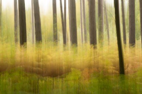 オレンジ, モーションブラー, 木, 森林の無料の写真素材