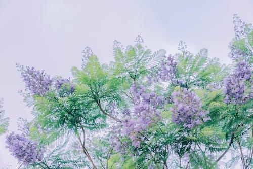 Foto d'estoc gratuïta de arbres, art, bonic, branques
