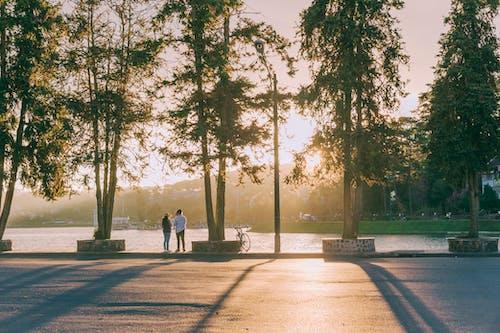 Foto d'estoc gratuïta de alba, capvespre, carrer, carretera