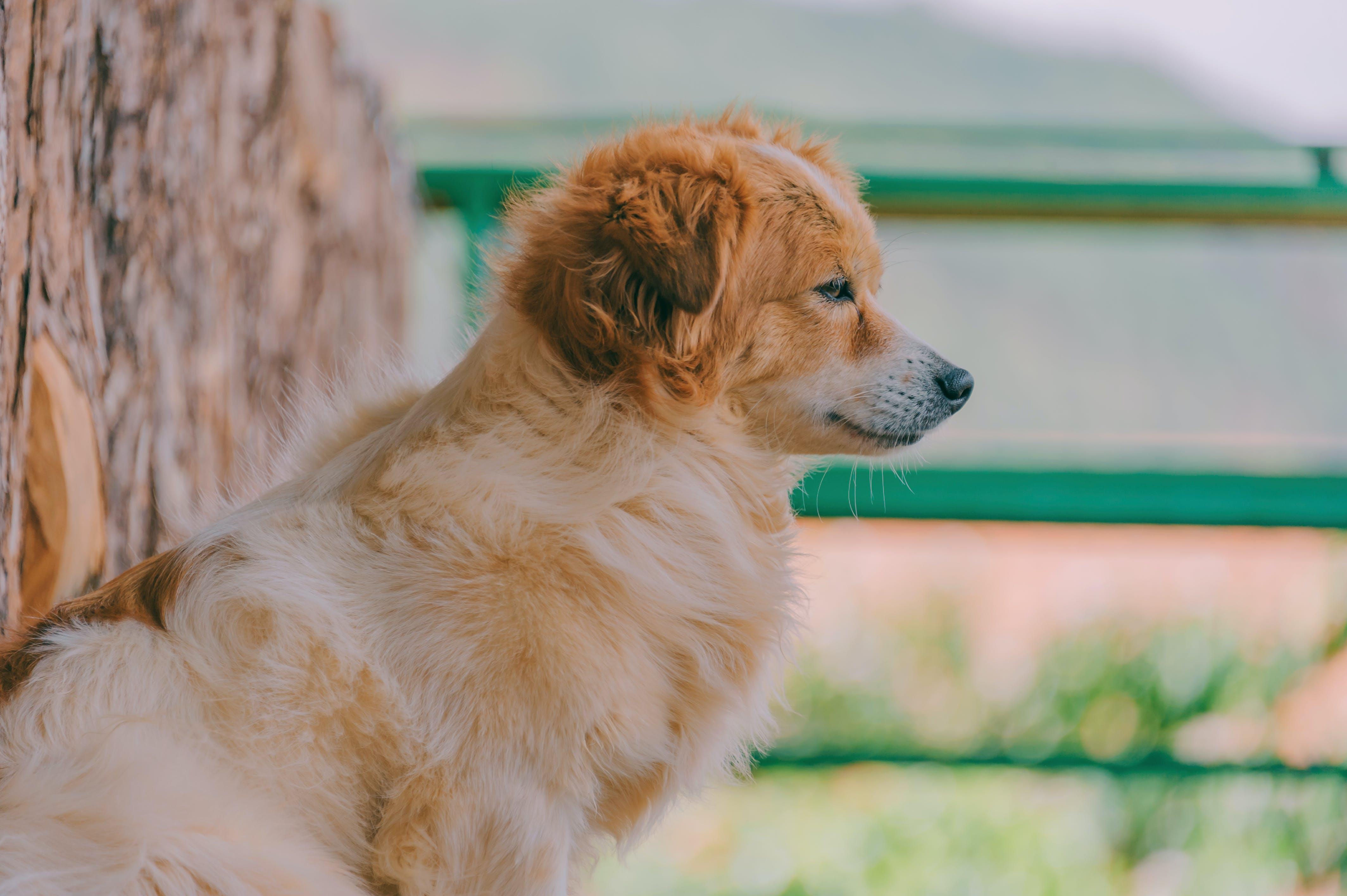 Безкоштовне стокове фото на тему «домашня тварина, милий, собака, собачий»