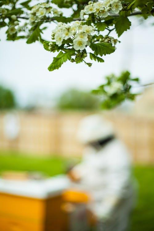 가벼운, 꽃, 꽃이 피는, 나무의 무료 스톡 사진