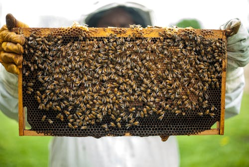 Person Holding Honeybomb With Honeybee