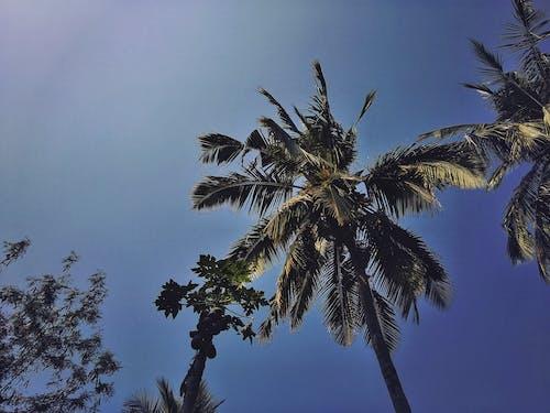 假期, 夏天, 天性, 天空 的 免費圖庫相片