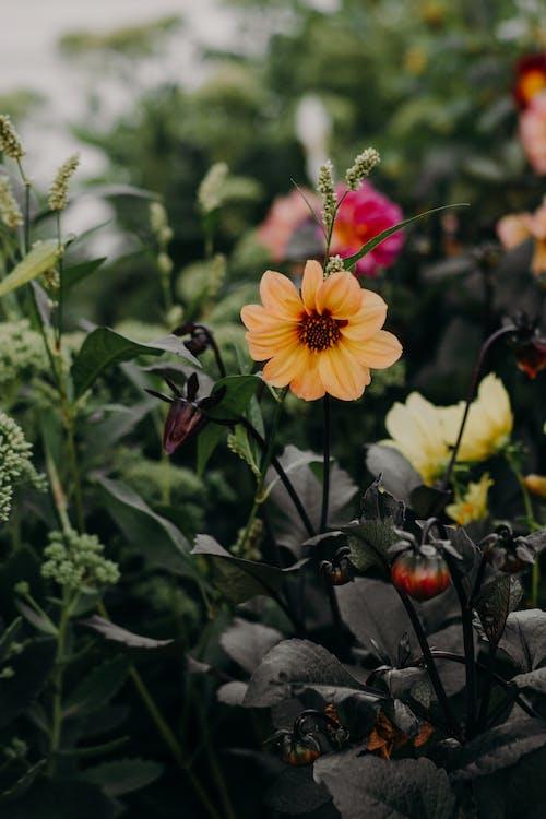 boke, bokeh, botanikus