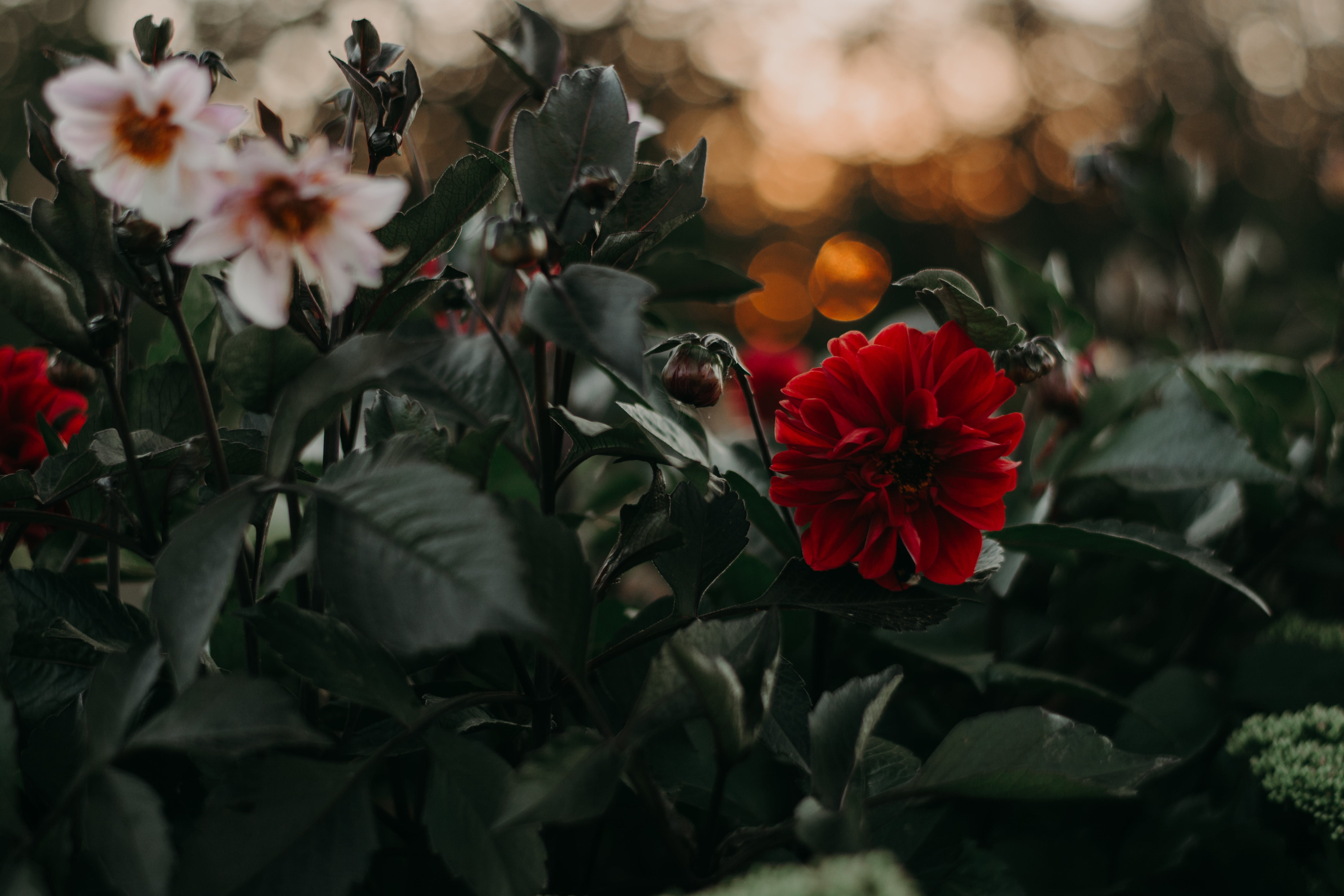 Selective and Bokeh Photography of Bloomed Flowers
