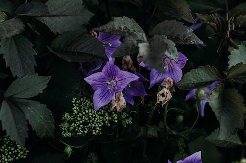 增長, 多年生, 明亮, 植物 的 免费素材照片