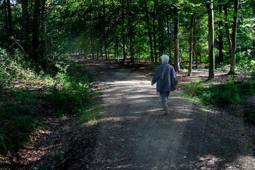 Základová fotografie zdarma na téma jdoucí lidé, sluneční paprsky