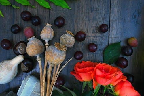 คลังภาพถ่ายฟรี ของ การเจริญเติบโต, ฉ่ำ, ดอกกุหลาบ, ทำด้วยไม้